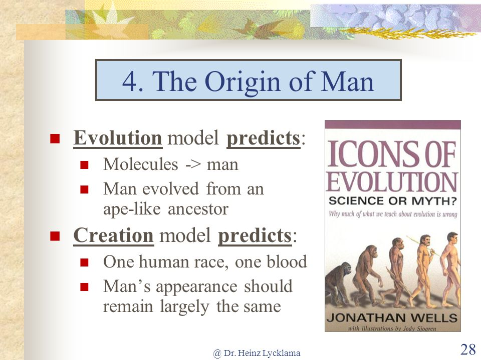 4. The Origin of Man Evolution model predicts: