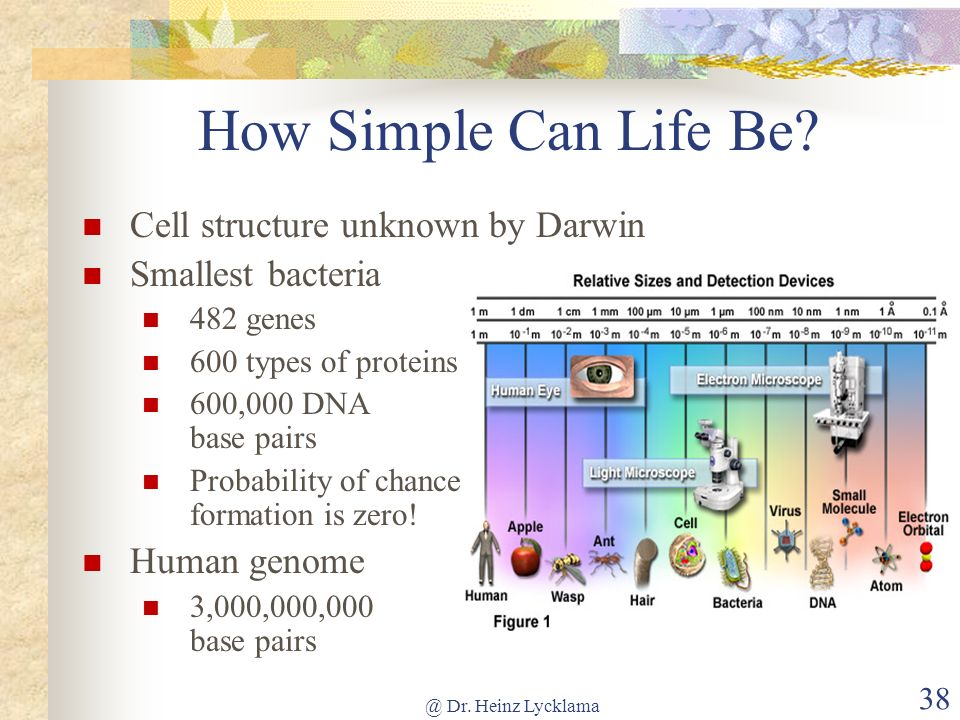How Simple Can Life Be Cell structure unknown by Darwin