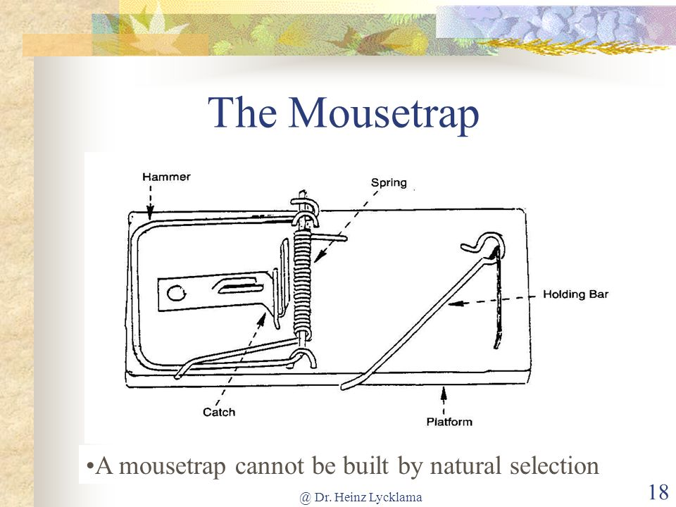 The Mousetrap A mousetrap cannot be built by natural selection