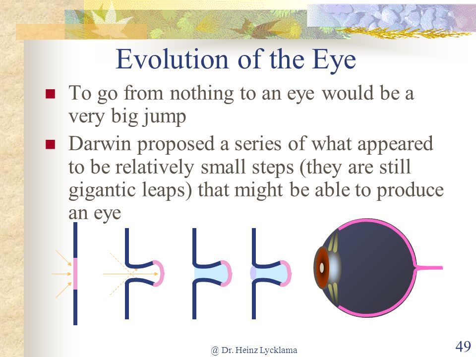 Evolution of the Eye To go from nothing to an eye would be a very big jump.