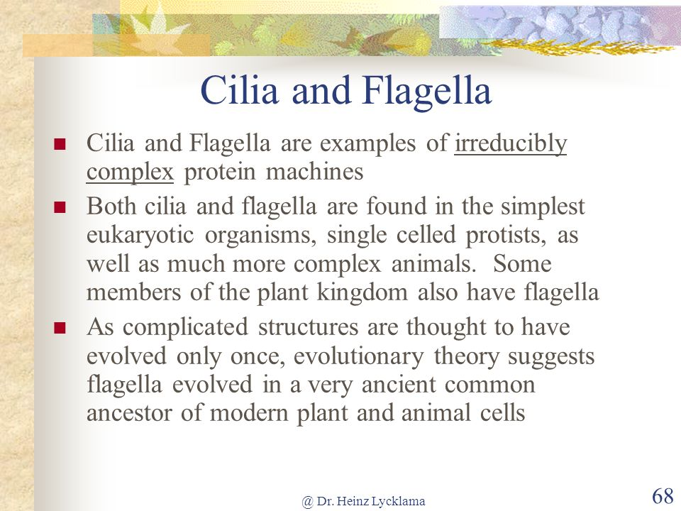 Cilia and Flagella Cilia and Flagella are examples of irreducibly complex protein machines.