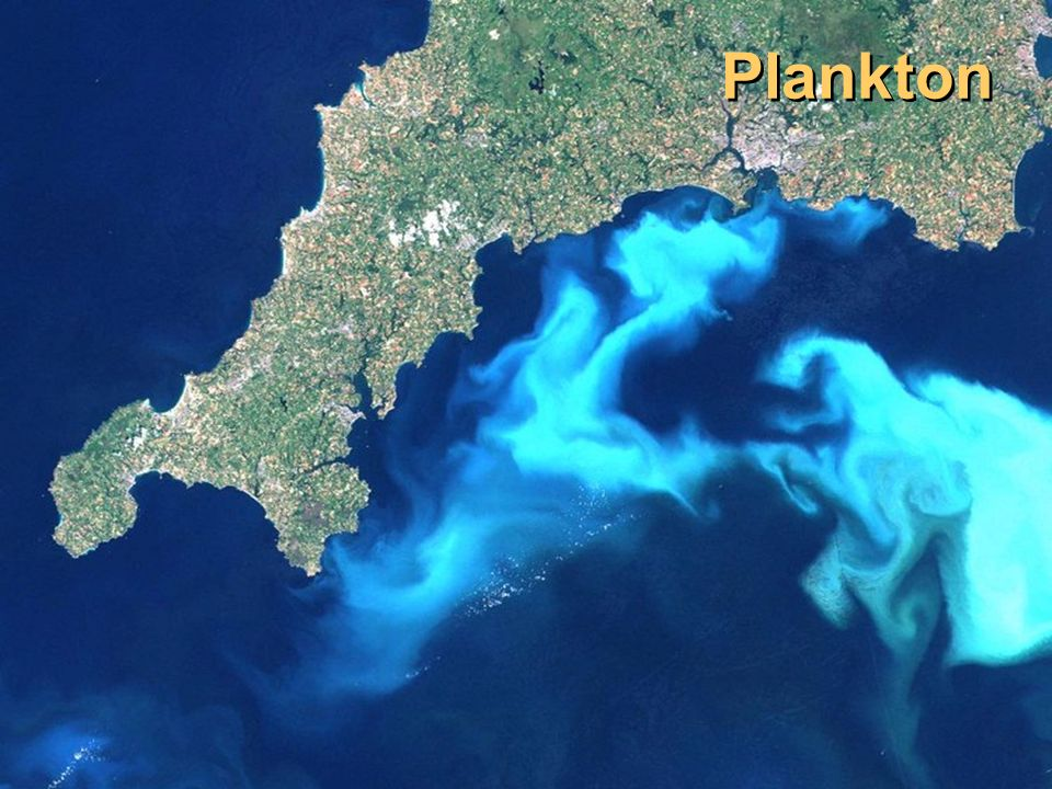 Plankton Image source: http://creationwiki.org/Plankton