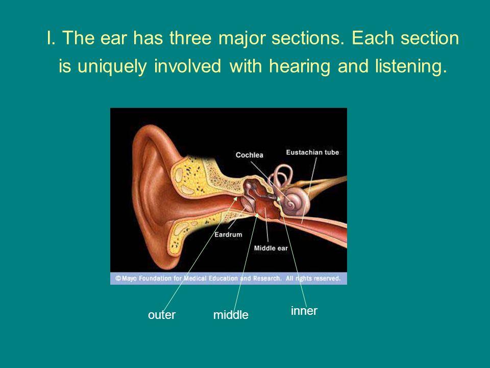 I. The ear has three major sections