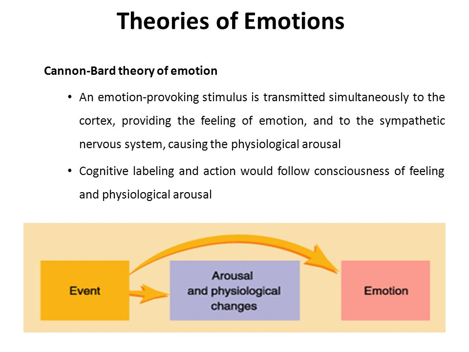 theories of emotions A summary of theories of emotion in 's emotion learn exactly what happened in this chapter, scene, or section of emotion and what it means perfect for acing essays, tests, and quizzes, as well as for writing lesson plans.