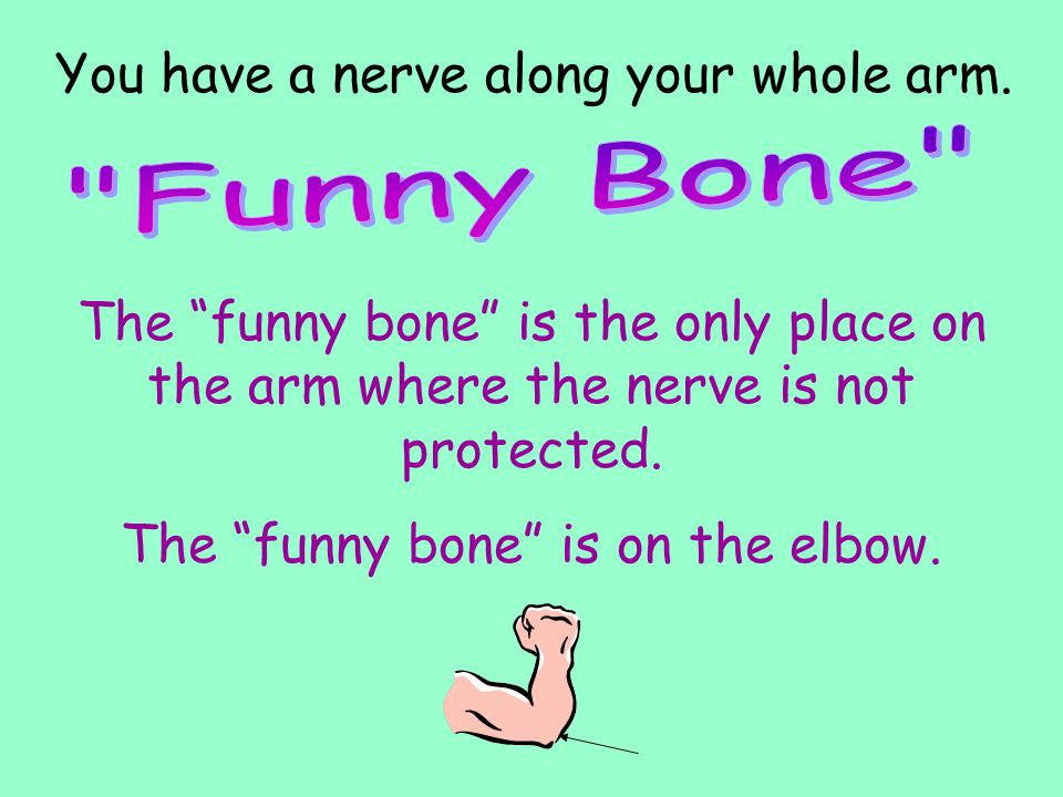 The funny bone is on the elbow.