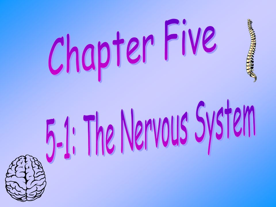 Chapter Five 5-1: The Nervous System