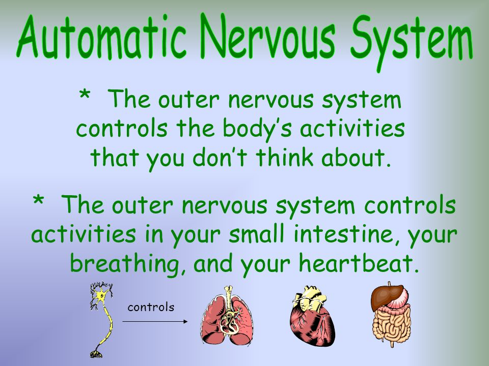 Automatic Nervous System