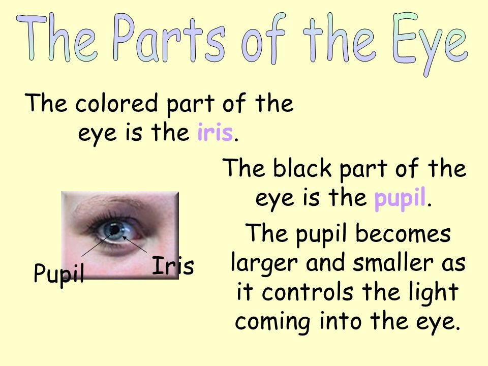 The colored part of the eye is the iris.
