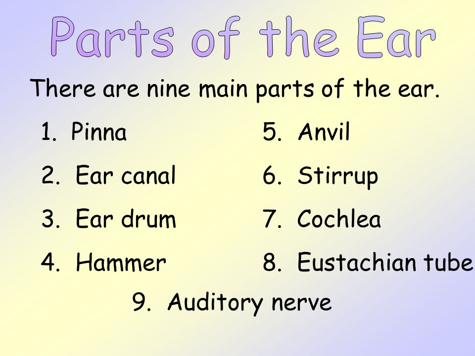 Parts of the Ear There are nine main parts of the ear. 1. Pinna. 5. Anvil. 2. Ear canal. 6. Stirrup.