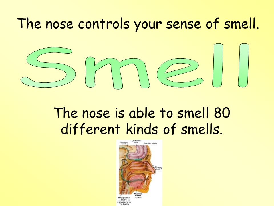 The nose is able to smell 80 different kinds of smells.
