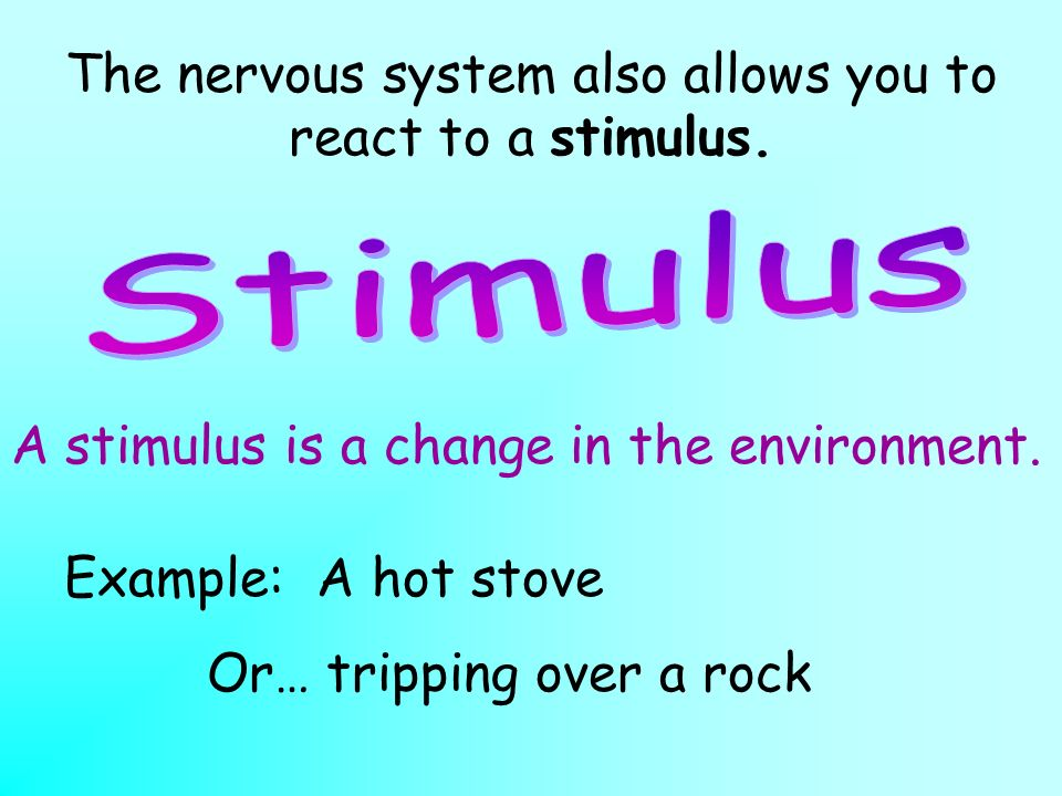 The nervous system also allows you to react to a stimulus.