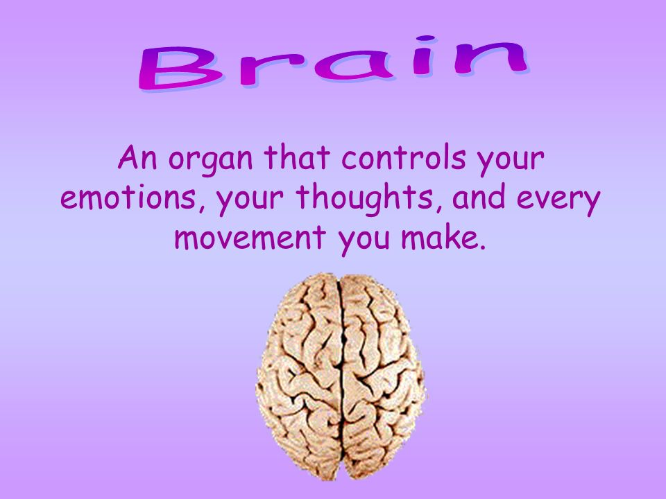 Brain An organ that controls your emotions, your thoughts, and every movement you make.