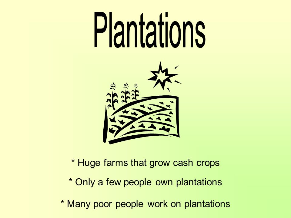 Plantations * Huge farms that grow cash crops