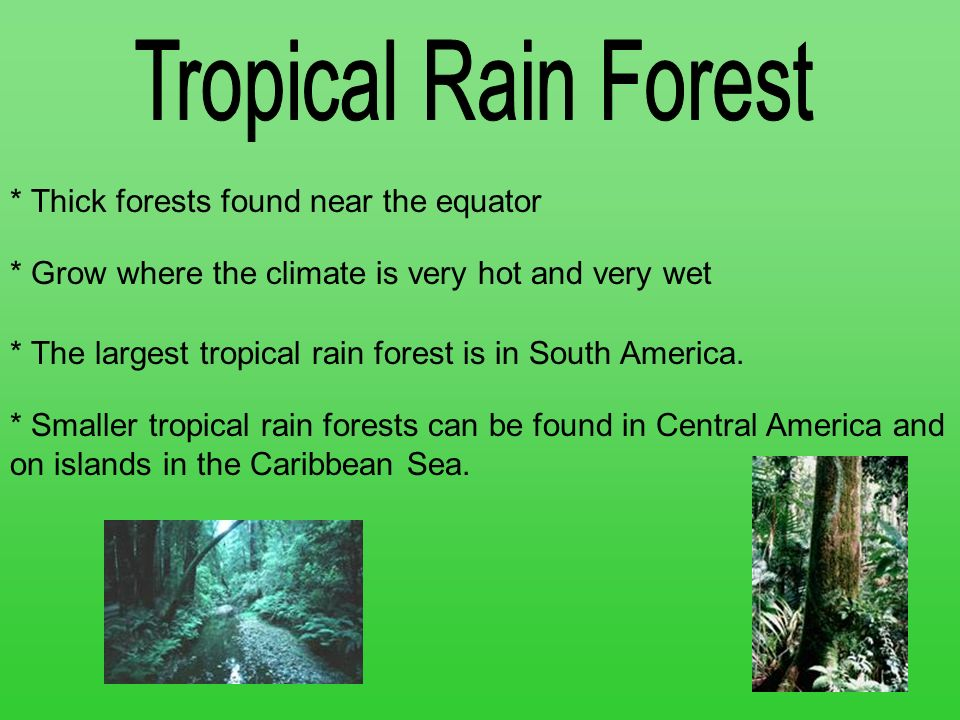 Tropical Rain Forest * Thick forests found near the equator