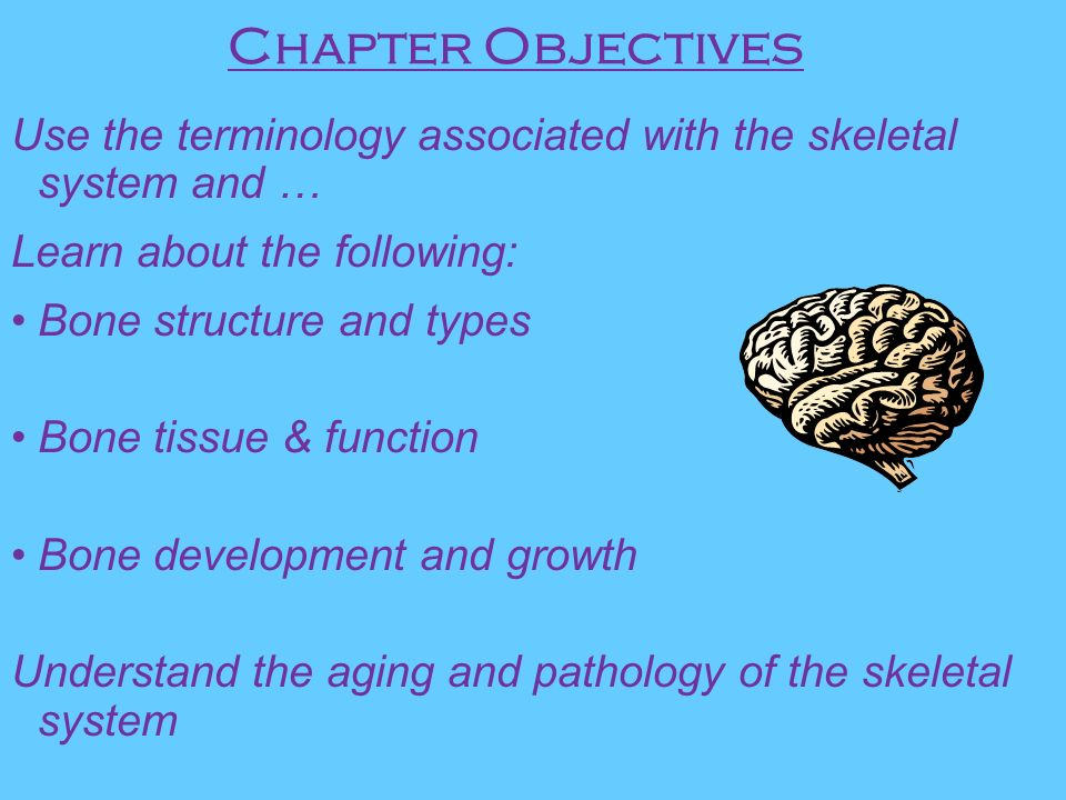 Ungewöhnlich Anatomy And Physiology Chapter 5 The Skeletal System ...