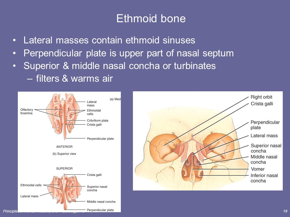 The Skeletal System: The Axial Skeleton Lecture Outline ...
