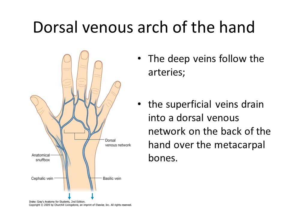 dorsal venous arch hand - klejonka, Cephalic Vein