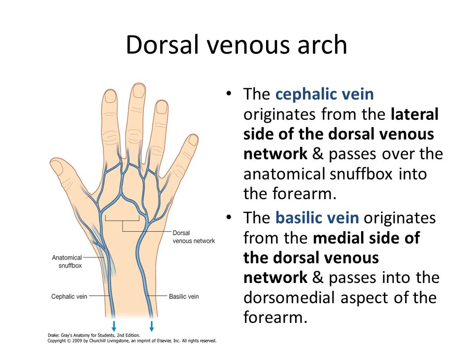 dorsal venous arch hand - klejonka, Cephalic vein