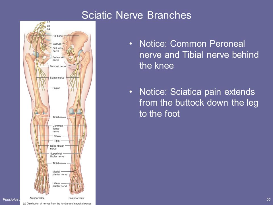 how to help sciatic nerve pain in leg