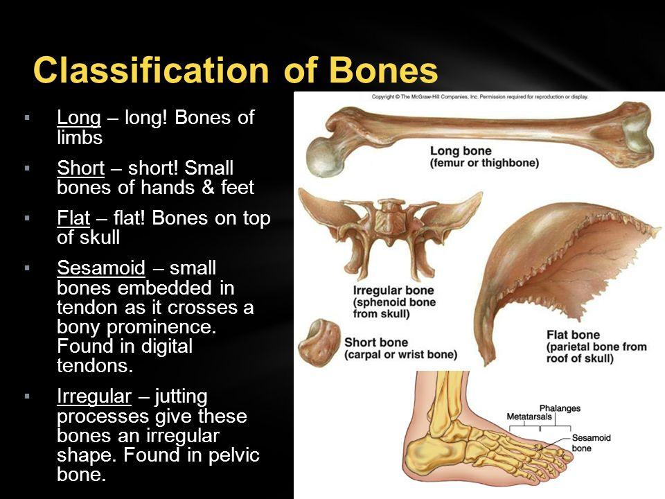 sphenoid bone classification – citybeauty, Human body