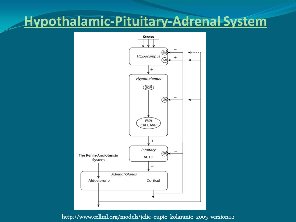 Hypothalamic-Pituitary-Adrenal System