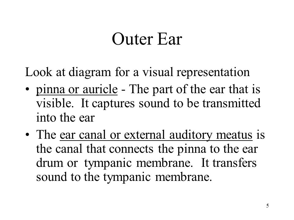 Outer Ear Look at diagram for a visual representation
