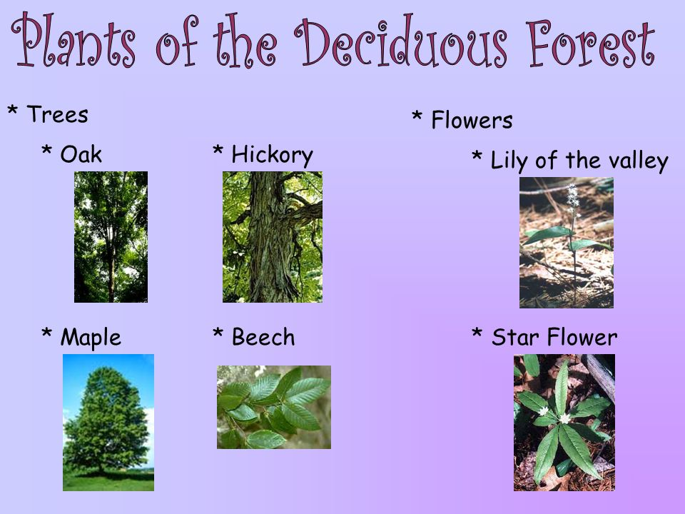Plants of the Deciduous Forest
