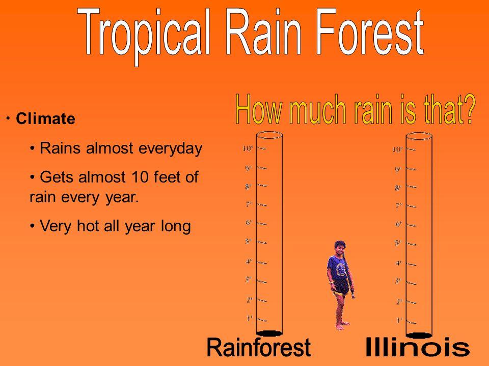 Tropical Rain Forest How much rain is that Rainforest Illinois