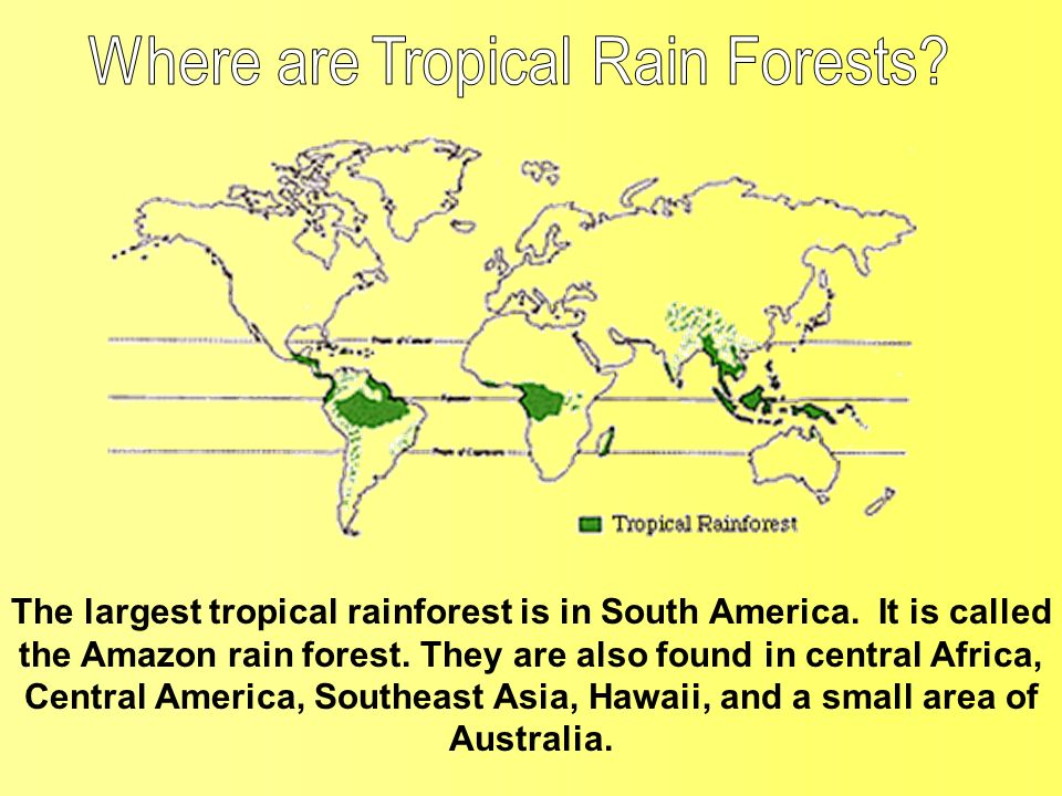 Where are Tropical Rain Forests