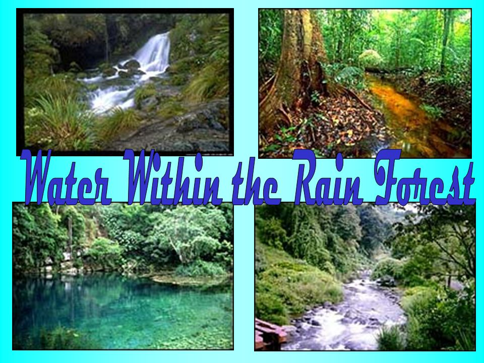 Water Within the Rain Forest