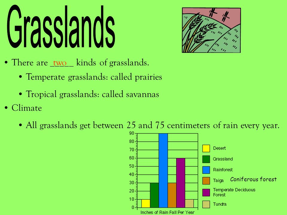 Grasslands There are _____ kinds of grasslands. two