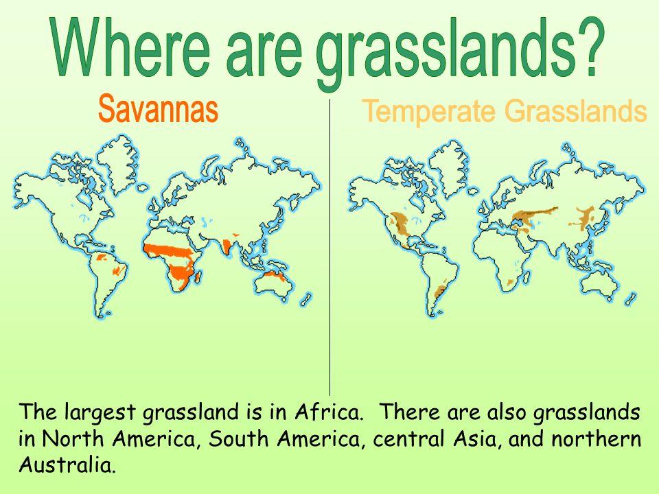 Where are grasslands Savannas Temperate Grasslands
