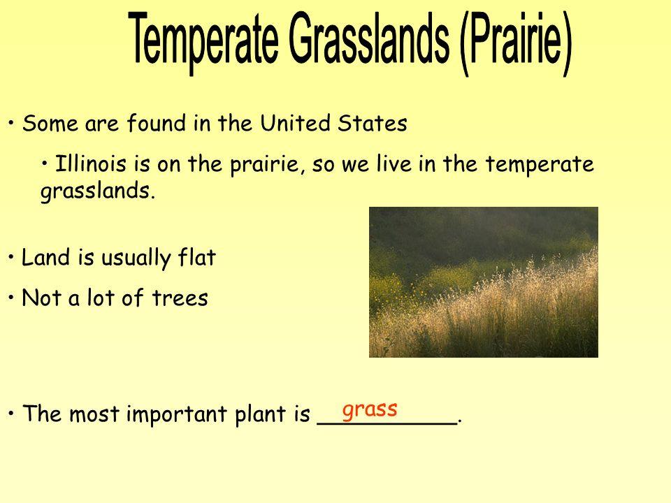 Temperate Grasslands (Prairie)