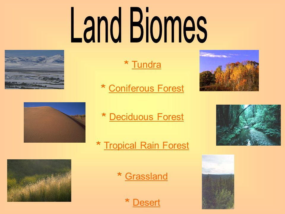 Land Biomes * Tundra * Coniferous Forest * Deciduous Forest