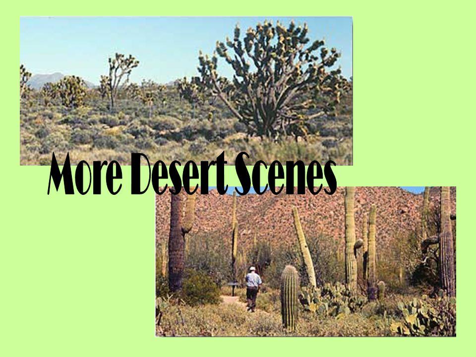 More Desert Scenes