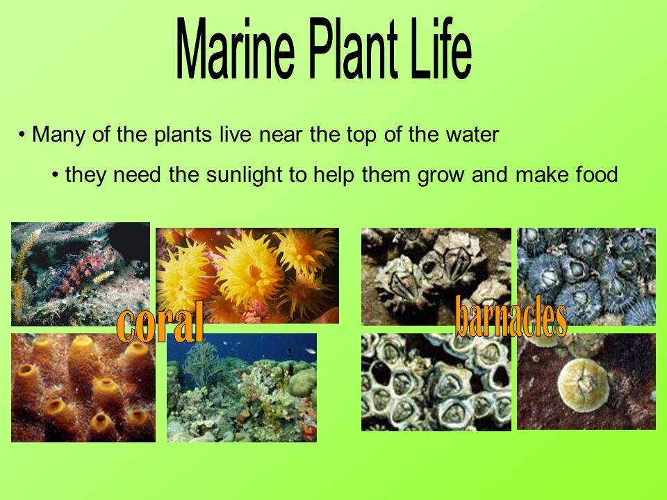Marine Plant Life barnacles coral