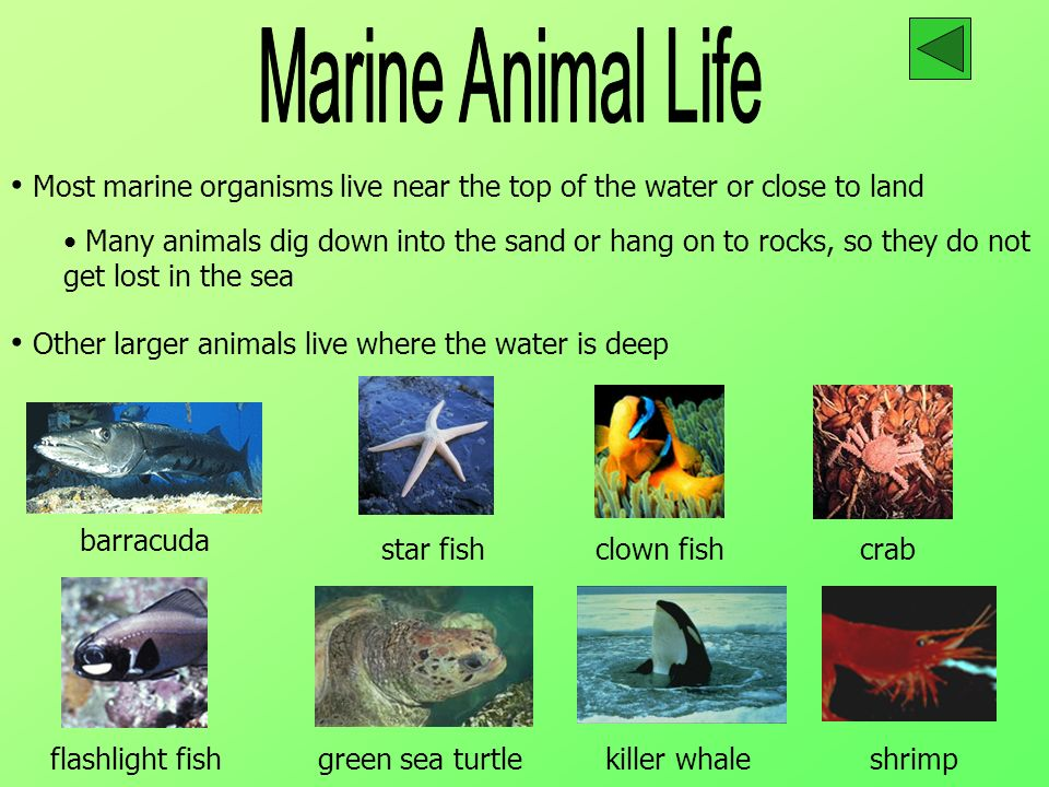 Marine Animal Life Most marine organisms live near the top of the water or close to land.