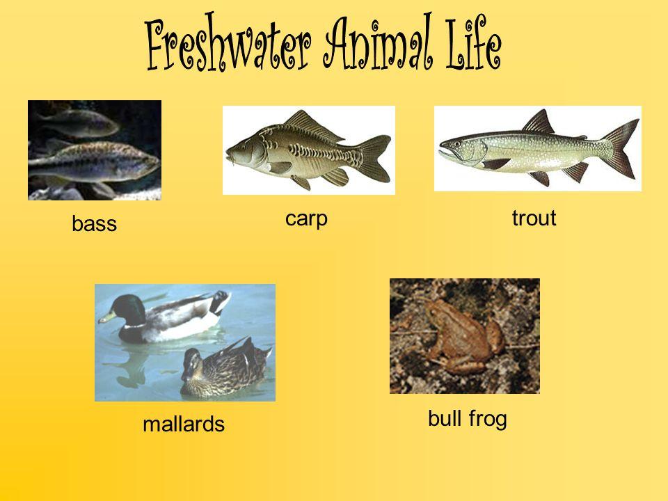 Freshwater Animal Life