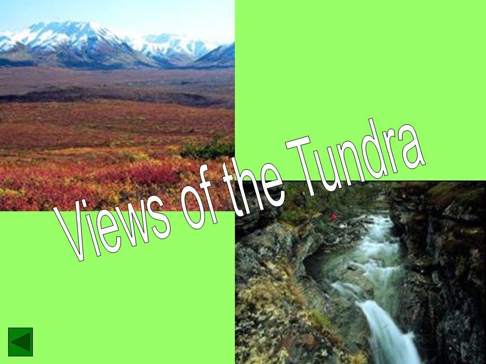 Views of the Tundra