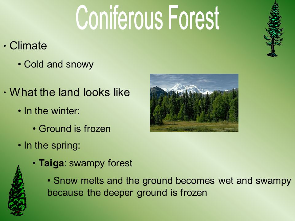 Coniferous Forest Climate Cold and snowy What the land looks like