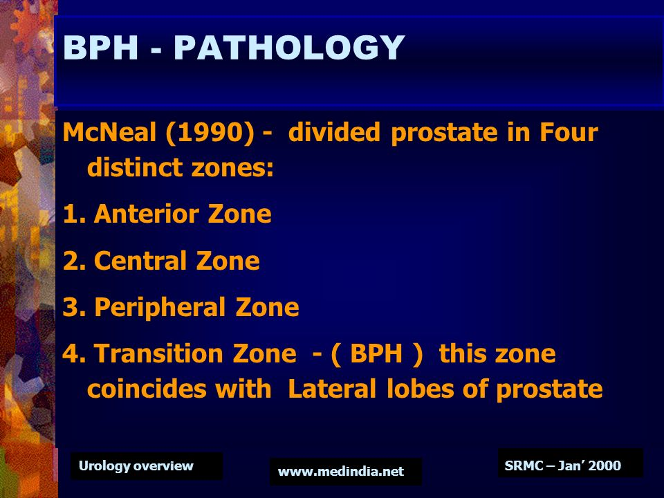 BPH - PATHOLOGY McNeal (1990) - divided prostate in Four distinct zones: 1. Anterior Zone. 2. Central Zone.