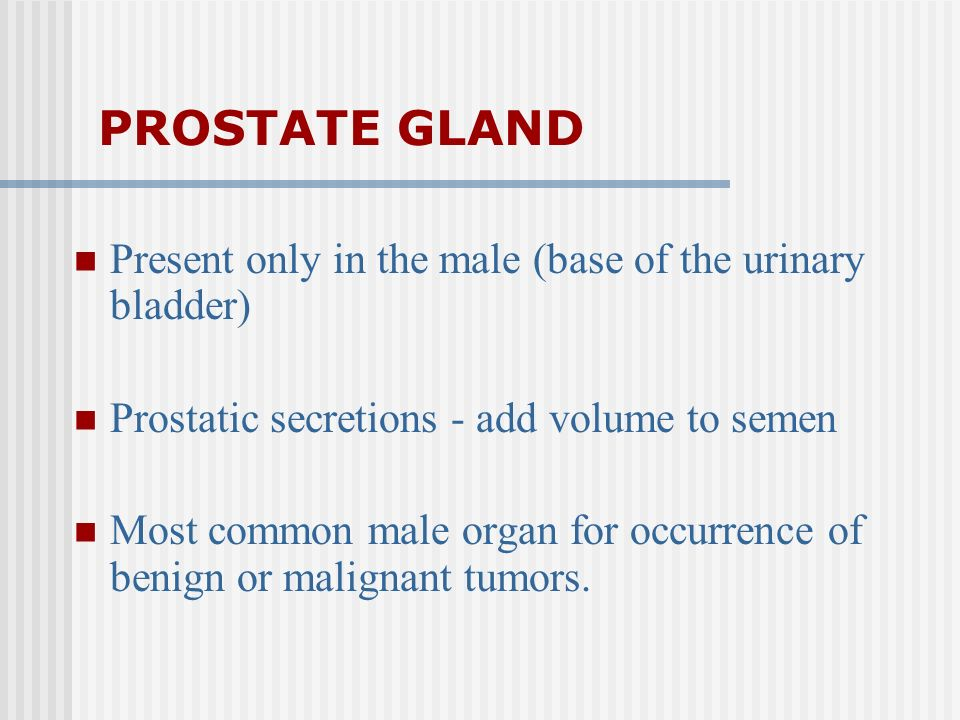 PROSTATE GLAND Present only in the male (base of the urinary bladder)