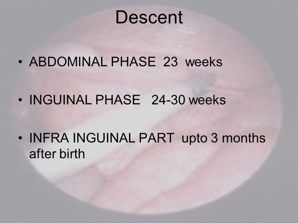 Descent ABDOMINAL PHASE 23 weeks INGUINAL PHASE 24-30 weeks