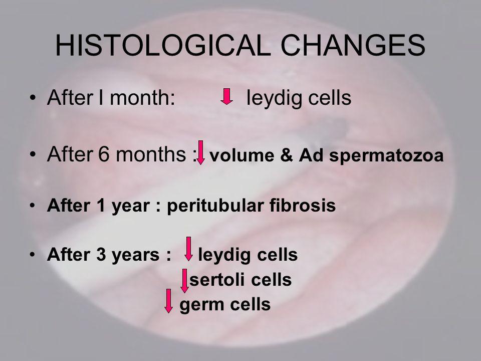 HISTOLOGICAL CHANGES After I month: leydig cells