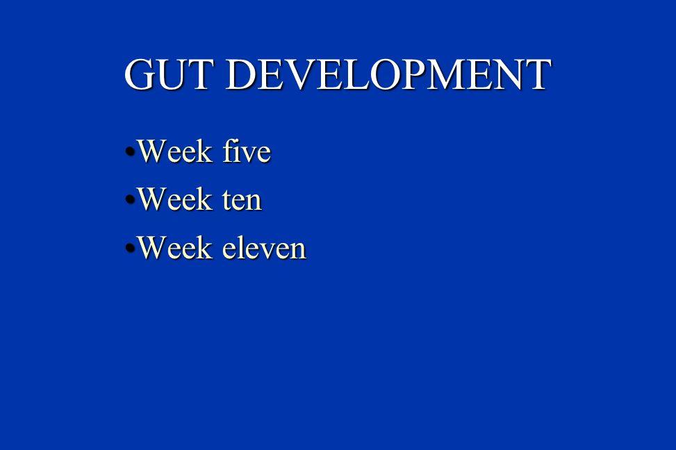 GUT DEVELOPMENT Week five Week ten Week eleven