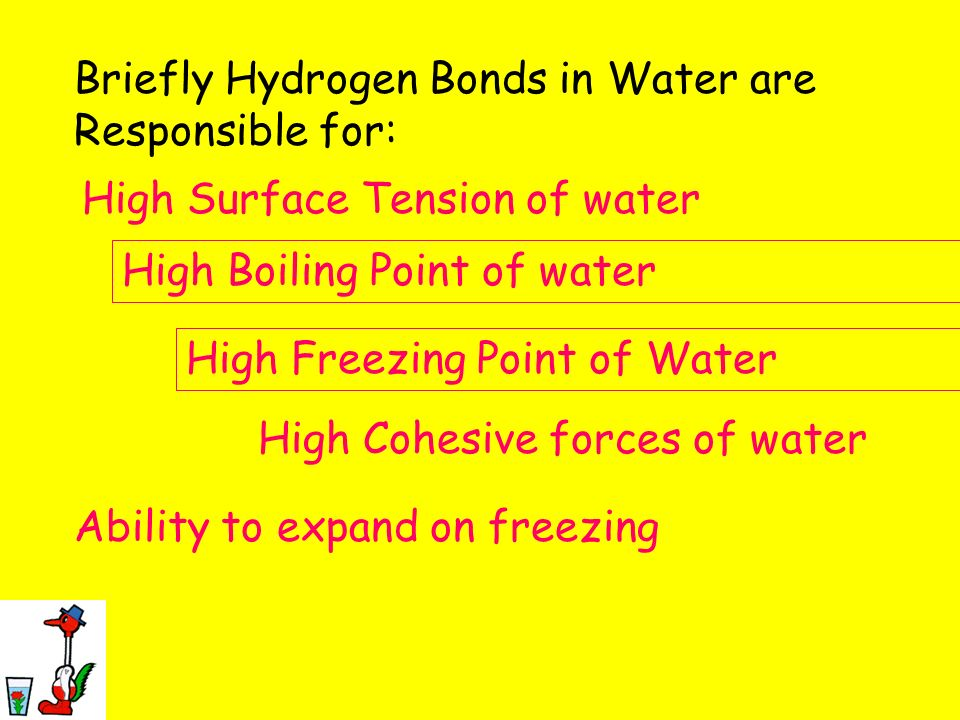 Briefly Hydrogen Bonds in Water are Responsible for: