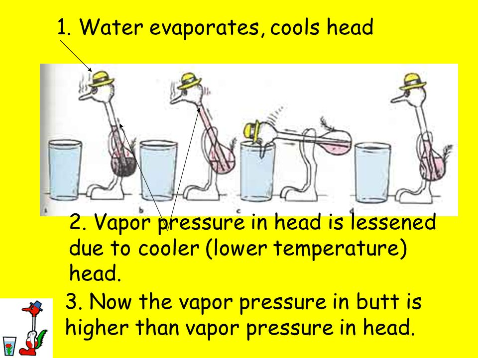 1. Water evaporates, cools head