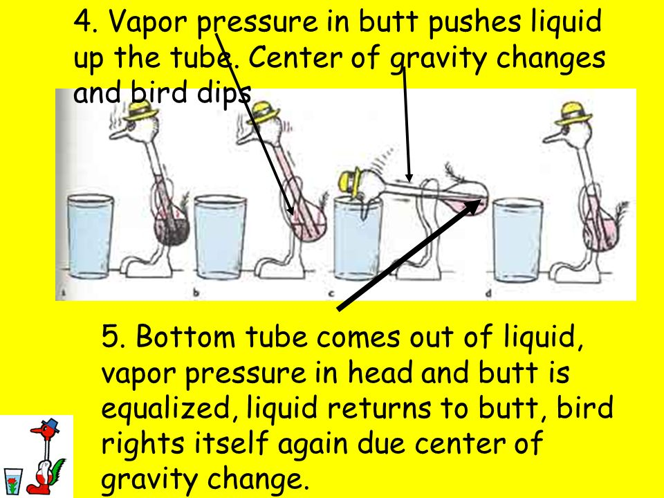 4. Vapor pressure in butt pushes liquid up the tube