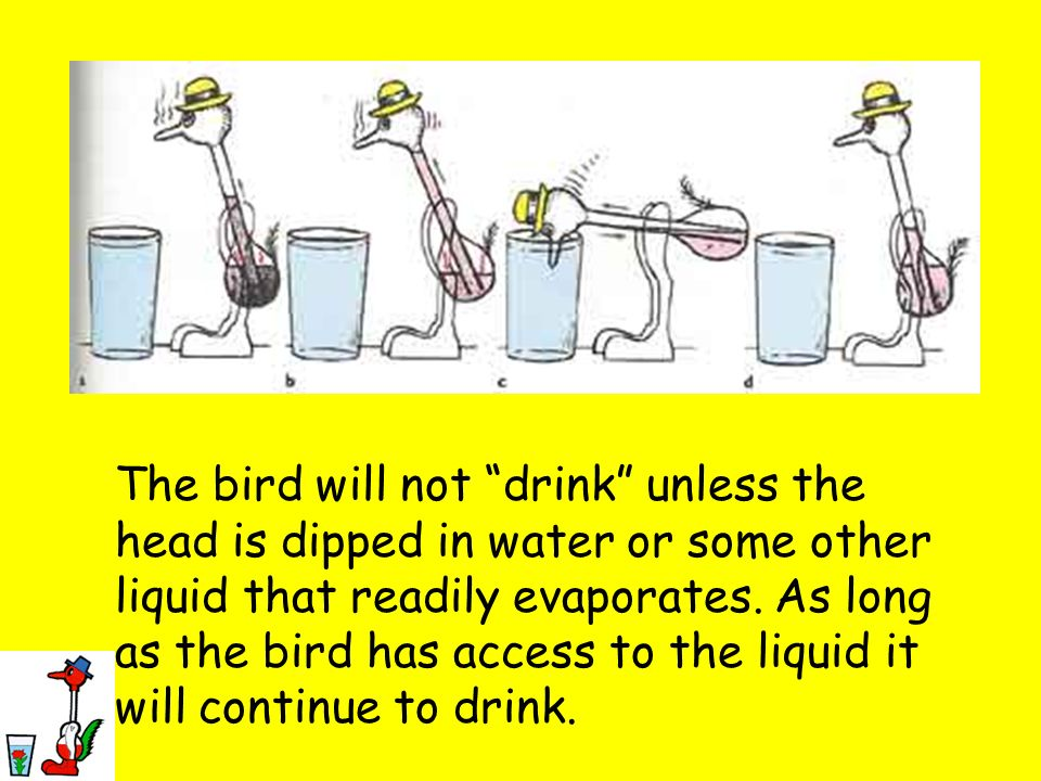 The bird will not drink unless the head is dipped in water or some other liquid that readily evaporates.