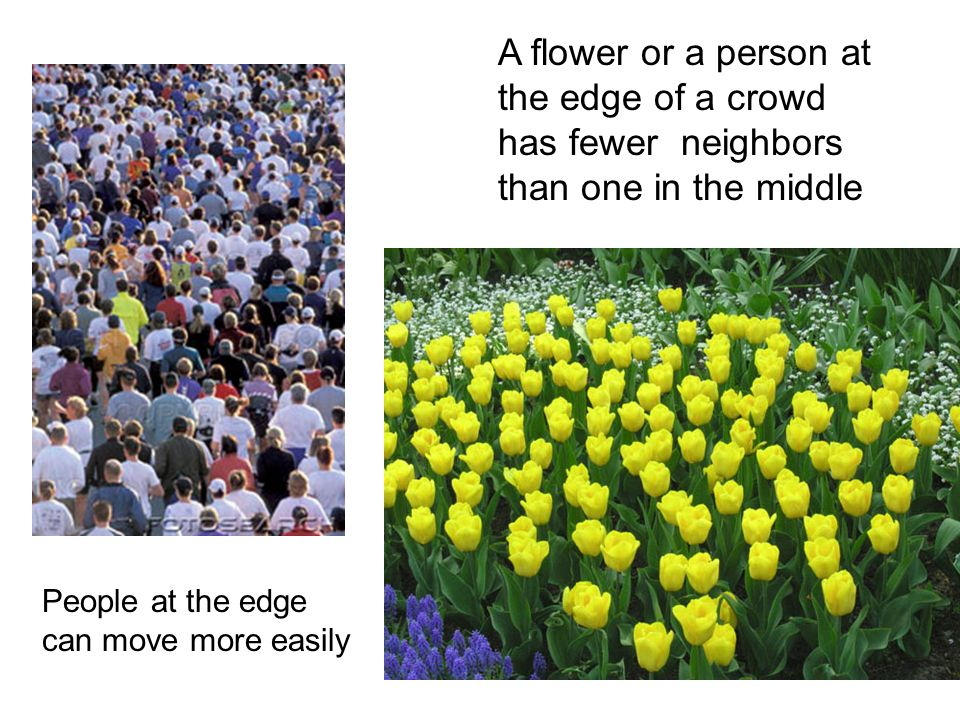 A flower or a person at the edge of a crowd has fewer neighbors than one in the middle